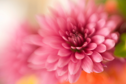 pink-flower_000005420955xsmall